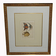 Antique Fish Print In Gilt Designer Frame