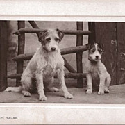 Real Photo Postcard of Two Dogs Entitled &quot;On Guard&quot;