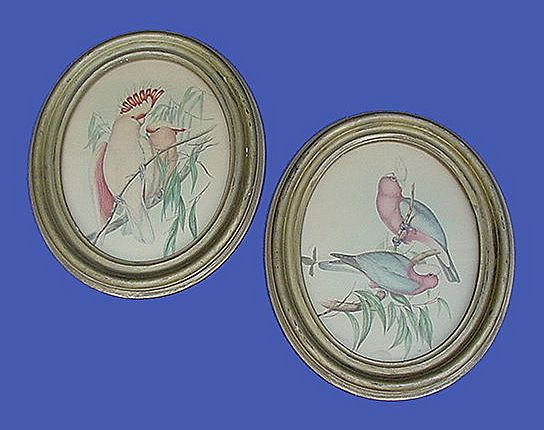Early 1900's Gould Cockatoo Prints in Oval Frames