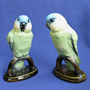 Vintage Blue-fronted Amazon Parrot Pair from Germany