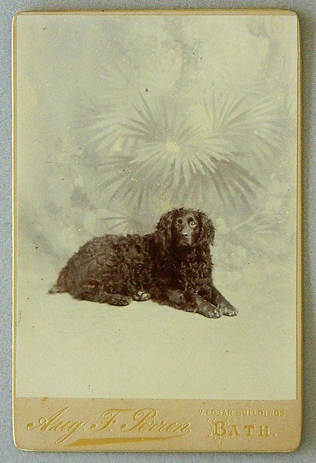 Antique Cabinet Photograph Retriever Dog