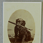Antique Cartes-De-Visites Dog Photograph