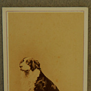 Antique Cartes De Visite Dog Photograph