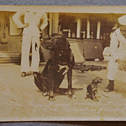Dog Mascots Of U.S.S. Florida Postcard