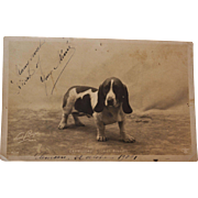 Antique French Dog Postcard
