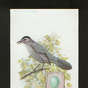 Singer Sewing Machine Advertising Card - Cat Bird
