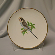 Bareuther Budgeriger Parakeet Decorative Porcelain Plate