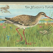 Victorian Era Trade Card - Van Houten's Cocoa Bird Card