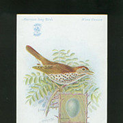 Singer Sewing Machine Advertising Card - Wood Thrush