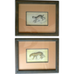 2 Lithograph Prints of an American Jaguar and Canadian Lynx