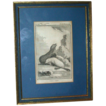 Antique Framed Book Plate Engraving Of Seals (toned),   &quot;L'ours Marin&quot;