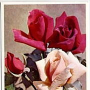 Beautiful Alfred MAINZER Flower Series #406 Pink & Red Roses~ALMA, Printed in Belgium