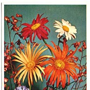Joyous Alfred MAINZER Flower Series #410 Daisy & Wildflower Bouquet~ALMA, Printed in Belgium