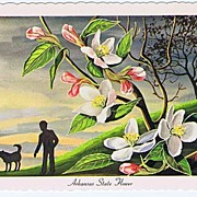 Beautiful Signed KEN HAAG State Flower Series Postcard~Arkansas APPLE BLOSSOM CE-25~EXC
