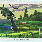 1968 Arkansas State Bird Deckle Edge KEN HAAG Postcard~#C-72 Mocking Bird