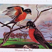 Hard To Find 1966 First Series Wisconsin State Bird Postcard~KEN HAAG 'Robin' Artwork! Capitol