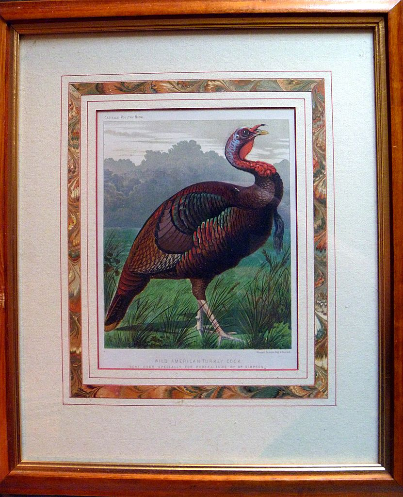 Antique Chromolithograph of a Turkey