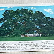 "SALE Vintage Postcard ""The President"" World's Largest Live Oak Tree"