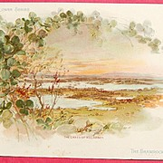 Extra Large Victorian Trade Card - National Flower Series - Ireland