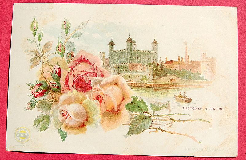 Extra Large Victorian Trade Card - National Flower Series - England