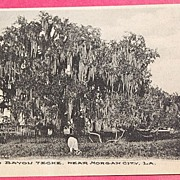 SALE 1908 Oak Tree On Bayou Teche Morgan City La. Postcard