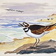 Shore Bird Sandpiper Water Color Signed by Maine Listed Artist