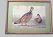 Colored Lithograph Wild Birds Alexander Pope 1878