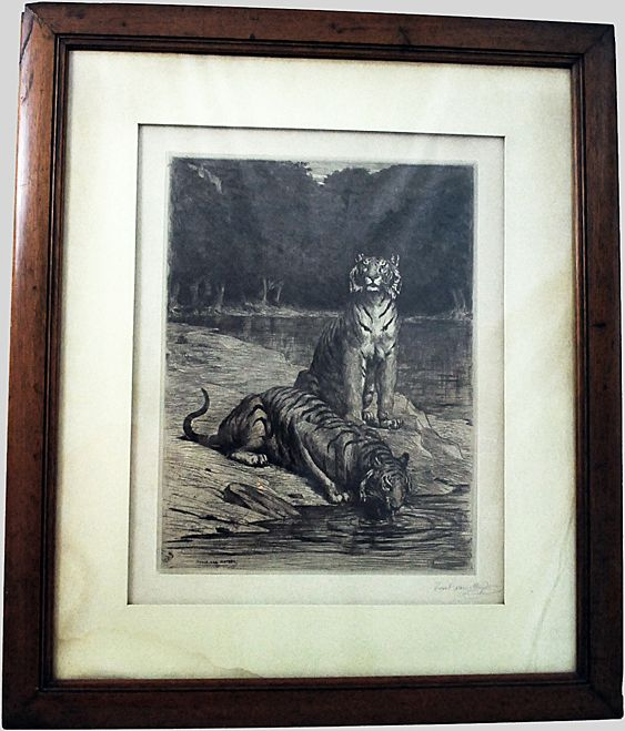 Tigers Ink Drawing 1887 Evert Van Muyden