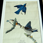 Antique Framed Audubon Blue Bird Print, Havell