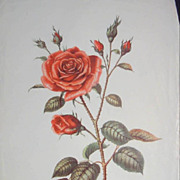 Roses - Trio of Vintage Rose Prints