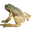 Antique Vienna Bronze frog signed by Bergmann