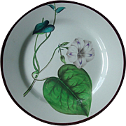 18th c. Antique Swansea Creamware Botanical Plate 1800