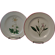 Pair Antique early 19th century English Creamware Botanical Plates 1810