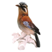 Karl Ens Porcelain Bird Figurine Jay Bird No 7098 Large