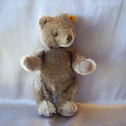 A  Cute Steiff Teddy Bear