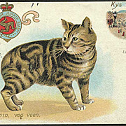 &quot;Cat with no Tail&quot;  (1909)