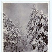 SALE 1930s San Antonio Canyon, California Real Photo Postcard � Mount Baldy � San Antonio Cany