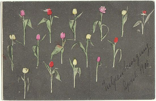 Unusual Postcard with Tulips. 1906