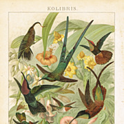 Honeysuckers: Chromo Lithograph from 1900