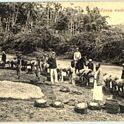 REDUCED Old Ceylon Postcard: Cocoa Washing