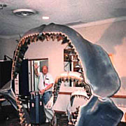 MASSIVE Megalodon Shark Teeth Collection~Thousands !