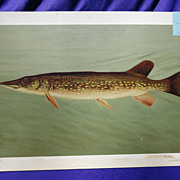 "1890's Chromolithograph Print of ""The Pike"" by William C. Harris"