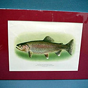 SALE Rainbow Trout Lithograph Signed Fly Fishing Art Mint  50 % Off