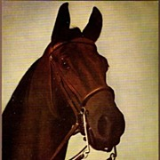 "Vintage Post Card Greetings Thoroughbred Race Horse ""Firefly"""