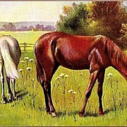 Vintage Post Card Art Animals Horses Grazing in Pasture