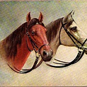REDUCED Vintage Post Card Art Two Horses with Bridals
