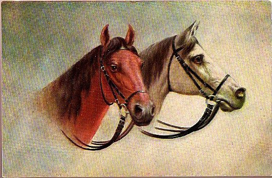 Vintage Post Card Art Two Horses with Bridals