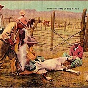 Vintage Post Card Western Cowboys Branding Cattle