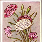 Vintage Post Card Artist Signed Birthday Greetings Carnations