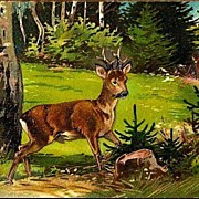 Vintage Post Card Art Deer in Woods